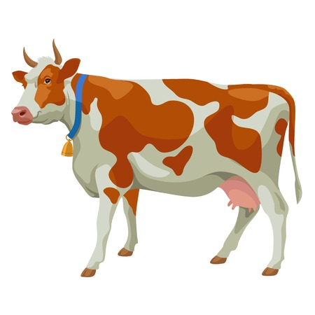Brown and white spotted cow with bell, side view, isolated