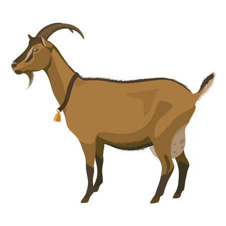 Brown goat with golden bell, side view, isolated