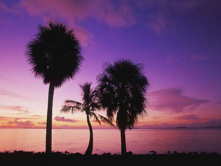 Plam trees at sunsise looking out across Florida Bay,  Everglades National Park, Florida photo