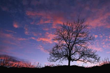 Sunset with tree photo