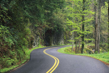 Asphalt road winding through the forest, Great Smoky Mountains National Park, Tennessee Stock Photo
