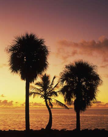 Florida Bay at sunrise photo