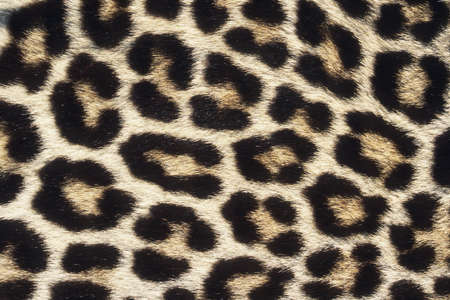 camouflage skin: Close up pattern of Leopard Skin