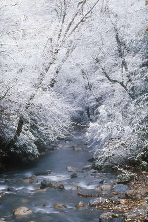 tennessee: Snow fall along Little Pigeon River, Great Smoky Mountains National Park Stock Photo