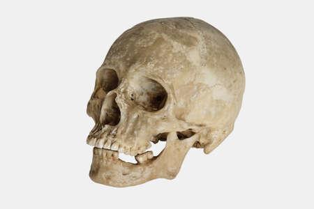 Human Skull (Homo sapiens) Stock Photo - 735916
