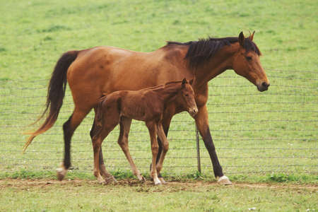 colt: Mother horse and three day old colt.