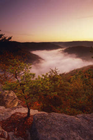 laden: Sunrise from Auxier Ridge showing fog laden valley and Autumn colors.  Red River Gorge area of the Daniel Boone National Forest in Kentucky, United States