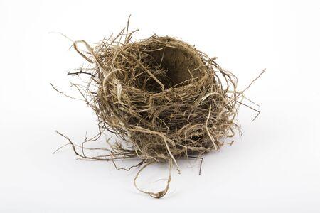 Robin's nest gefotografeerd in de studio op een witte achtergrond