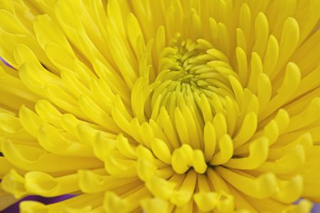 Close up of a yellow flower showing the petals Stok Fotoğraf