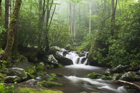 Ontspannen schilderachtige langs de Roaring Fork Moter Tour in de Great Smoky Mountains National Park Stockfoto
