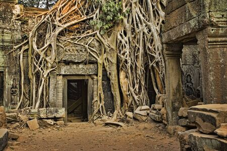 Ficus Strangulosa tree growing over a doorway in the ancient ruins of Ta Prohm at the Angkor Wat site in Cambodia Stock Photo - 9389920