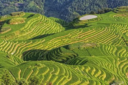 Weergave van Seven Stars begeleiden de Maan, een deel van de Dragon's Backbone rijstterrassen, of Longji rijstterrassen in het Chinees, dicht bij het dorp Ping'an in het noorden van Guilin, Guangxi Zhuang Autonome Regio aka provincie Guangxi China Stockfoto - 44231185