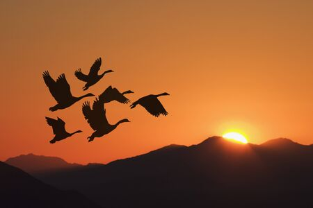 Very relaxing sunrise with silhouetted birds flying toward the sunrise