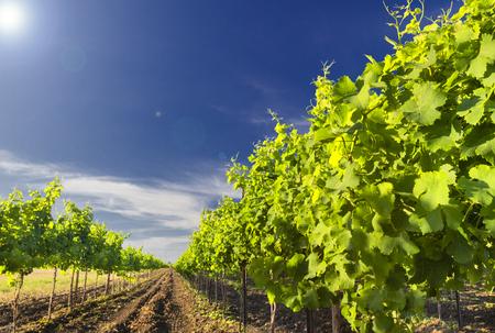 vi�edo: Vi�edo verde y cielo azul en Israel. Las im�genes se toman en un d�a despejado con nubes en el cielo. tambi�n hay sol brillante resplandor. Im�genes HDR.
