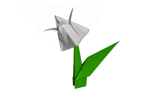 Origami tulip flower.  The tulip is isolated on white background and casts shadow on the surface. It has closed or open petals and a green stalk.