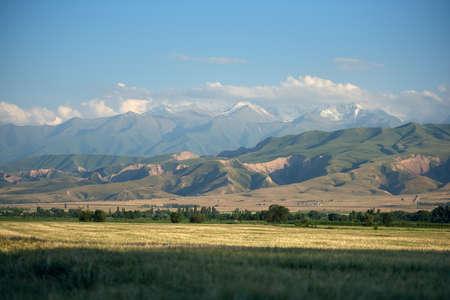 Fresh barley field Kyrgyzstan landscape on a summer day