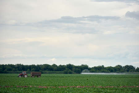 Tractor Growth, monoculture. Agricultural irrigation system watering corn field