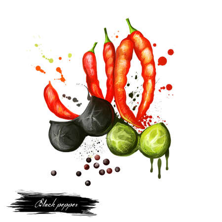 piperaceae: Black and red pepper hand draw illustration. Chilli. Black pepper or piper nigrum. Flowering vine in the family Piperaceae. Dried spice seasoning. Peppercorn. Herbs and spicies. Digital art Stock Photo