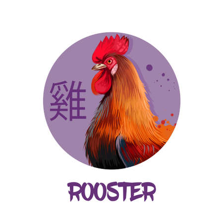 Rooster chinese horoscope character isolated on white background. Symbol Of New Year 2017. Pet hen bird in round circle with hieroglyphic sign, digital art realistic illustration, greeting card