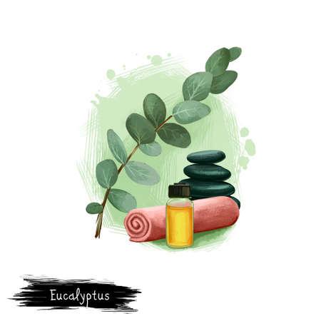 유칼립투스 아유르베 다 허브 화이트에 고립 된 텍스트로 디지털 아트 그림. 건강한 유기 식물은 널리 치료 및 치료, 준비를위한 공장 천연 건강 관리