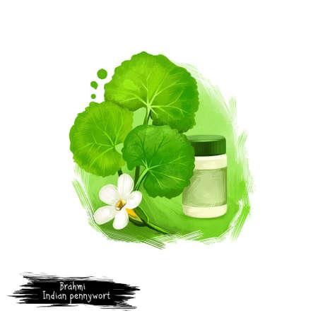 Brahmi- 인도 페니짜리 약초 허브 디지털 아트 그림. 건강한 유기 식물은 널리 치료 및 치료, 준비를위한 공장 천연 건강 관리를위한 의약품에 사용 스톡 콘텐츠