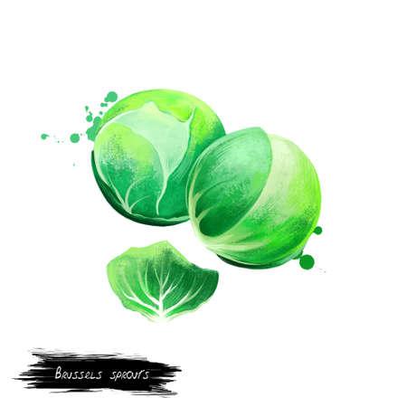 Spruitjesgroente op wit wordt geïsoleerd dat. Hand getrokken illustratie van groene koolsoorten gegroeid voor eetbare knoppen en blad. Biologisch voedsel. Digitale kunst met verf spatten effect. Stockfoto