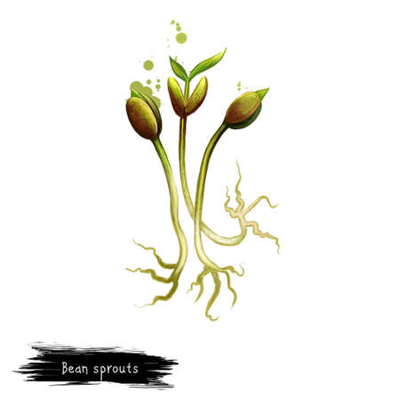 Bean sprouts isolated on white background. Digital art illustration of Bean sprout ingredient, made from sprouting beans. Organic healthy food. Hand drawn. Clip art graphic design element, sticker