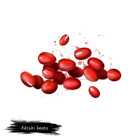 Haricots Adzuki, azuki ou aduki, illustration de l'art numérique haricot mungo rouge isolé sur blanc. Aliments sains biologiques. Légume vert. Closeup plante dessinée à la main. Clip art illustration. Élément de design graphique Banque d'images - 83468461