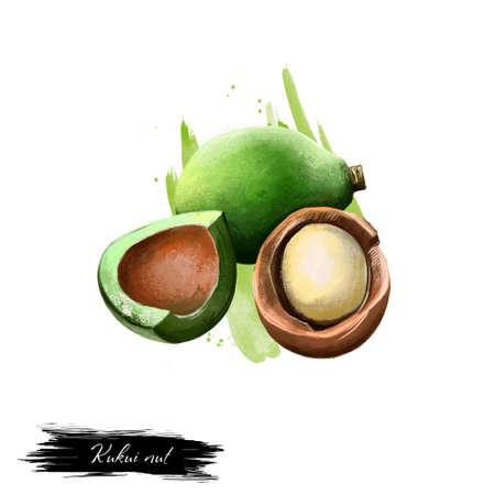 Kukui nut isolated on white. Hand drawn illustration of candleberry, Indian walnut, kemiri, varnish tree, nuez de la India, buah keras, or kukui. Organic healthy food. Digital art with splashes Stock Illustration - 83468476