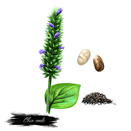 Chia seed isolated on white. Hand drawn illustration of golden chia with blue flowers and green leaf. Organic healthy food. Digital art with paint splashes effect. Graphic clip art for design. Stock Photo