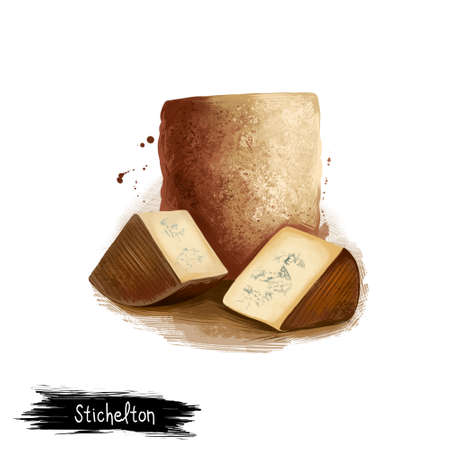 Stichelton チーズのデジタル アートのイラスト白い背景に分離されました。新鮮な乳製品、現実的なデザインで健康的な有機食品。おいしい前菜、グ