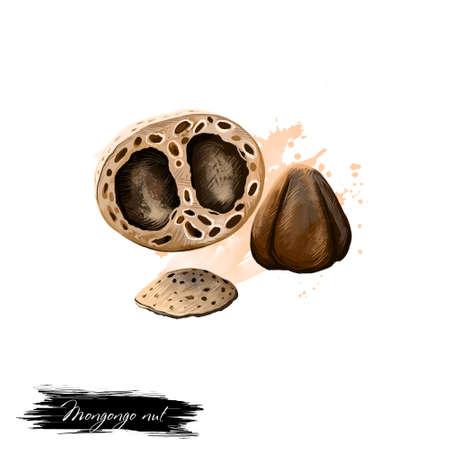 モンゴンゴ ナット白で隔離。モンゴンゴ フルーツ、manketti ナットまたは nongongo の描き下ろしイラストを手します。有機健康食品。ペイントでデジ