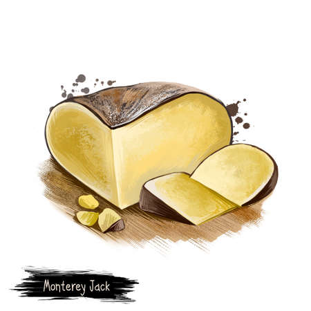 Monterey Jack cheese digital art illustration isolated on white background. Fresh dairy product, healthy organic food in realistic design. Delicious appetizer, gourmet snack italian meal