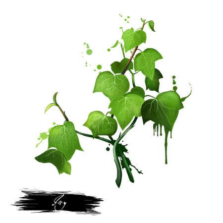 Groene klimoptwijg die op witte achtergrond wordt geïsoleerd. Hand getrokken Araliaceae familieplant. Ontwerp met heldere kleuren, realistische weergave van het volume. Wenskaart ontwerp. Clip art. Voeg uw tekst toe. Digitale kunst.