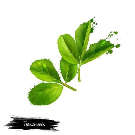 Fenegriek. Shambala. Helba. Fenugreek trigonella foenum-graecum, medicinale plant. Eenjarige plant in Fabaceae, met bladeren die bestaan uit drie kleine omgekeerde tot langwerpige blaadjes. Kruidencollectie. Digitaal