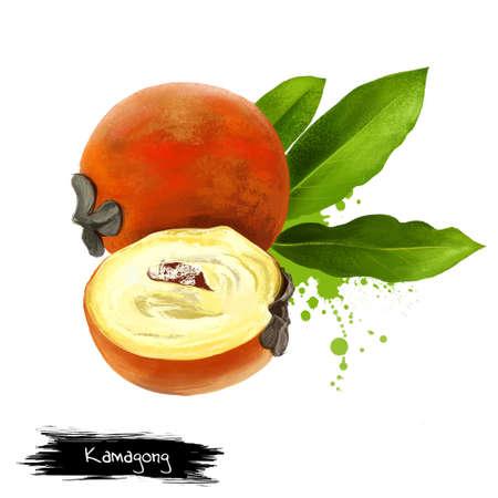 カマゴン、mabolo、talang、バター フルーツや白い背景で隔離のベルベット リンゴ。カキの blancoi。食用に適する果実は正常、赤味がかった茶色のビロ 写真素材