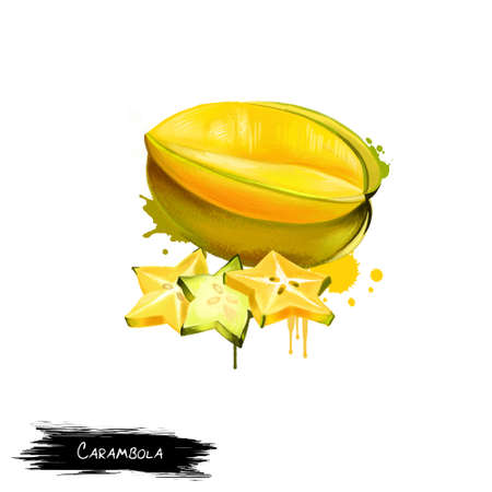 Yellow fruit carambola isolated on white. Starfruit of Averrhoa carambola. Entire fruit edible, including slightly waxy skin. Flesh crunchy, firm, and extremely juicy. Fruits collection. Digital art