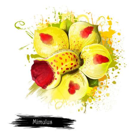 아름 다운 Mimulus Luteus 또는 노란색 원숭이 꽃. 혈액 드롭 Emlets 또는 원숭이 사향. Tigrinus, 봄 식물입니다. 꽃과 허브의 꽃 시리즈의 일부입니다. 자연 개