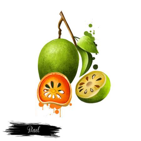 Bael-fruit Aegle-geïsoleerde marmelos. Droge plakjes en vers fruit van Bael. Aegle marmelos, bael, bhel, ook Bengaalse kwee, gouden appel, Japanse bittere sinaasappel, steenappel of houten appel. Digitale kunst Stockfoto