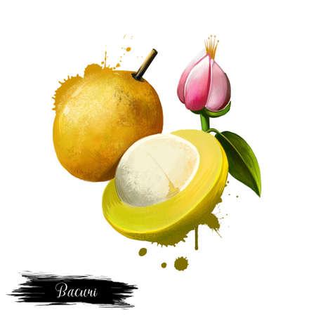Amazonische traditionele fruitbacuri. Platonia insignis, de enige soort van het geslacht Platonia. Bacuri, maniballi, naranjillo en bacurizeiro. Fruits of the world-verzameling. Digitale kunst