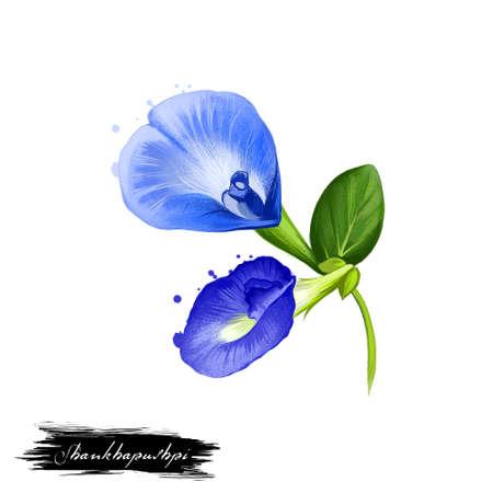 Illustrazione digitale di arte dell'erba ayurvedic del fiore blu di Shankhapushpi con testo isolato su bianco. Sana pianta termale organica ampiamente utilizzata nel trattamento, per la preparazione di medicinali per usi naturali Archivio Fotografico - 84219277
