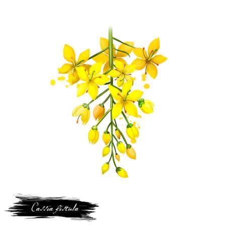 Amaltas - Cassia fistula ayurvedica alle erbe, fiore. illustrazione di arte digitale con testo isolato su bianco. Sana pianta termale organica ampiamente utilizzata nel trattamento, per la preparazione di medicinali per usi naturali Archivio Fotografico - 86166948