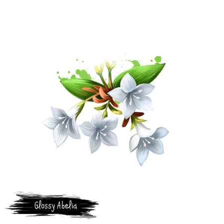 Digital-Kunstillustration des glatten Abelia lokalisiert auf Weiß. Hand gezeichneter blühender Busch der Caprifoliaceaefamilie. Bunte botanische Zeichnung. Grußkarte, Geburtstag, Hochzeitstag Grafik-Design Standard-Bild - 85850914
