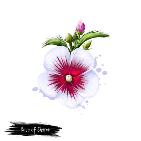 Digital-Kunstillustration von Rose von Sharon lokalisiert auf Weiß. Hand gezeichneter blühender Busch Hibiscus syriacus. Bunte botanische Zeichnung. Grußkarte, Geburtstag, Jubiläum, Hochzeit Grafik ClipArt Standard-Bild - 85850917
