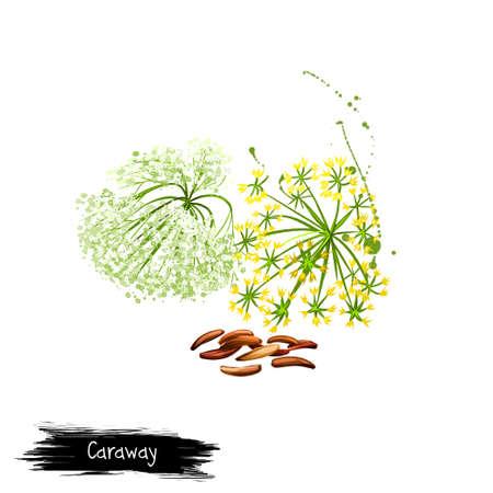 Digitale kunst Karwij, meridiaanvenkel of Perzische komijn die op witte achtergrond wordt geïsoleerd. Biologisch gezond voedsel. Groene groente. Hand getrokken plant close-up. Clip kunst illustratie. Grafisch ontwerpelement Stockfoto
