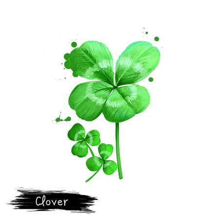 Digital art Clover, Trefoil or Trifolium repens isolated on white background. Organic healthy food. Green vegetable. Hand drawn plant closeup. Clip art illustration. Graphic design element Stock Photo