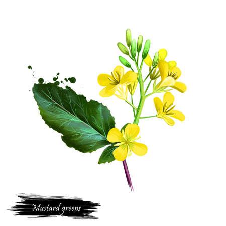 겨자 채소, 흰색 배경에 고립 된 브라 시카 기념품의 디지털 아트 그림. 유기농 건강 식품. 녹색 야채입니다. 손으로 그린 된 공장 근접 촬영입니다. 클