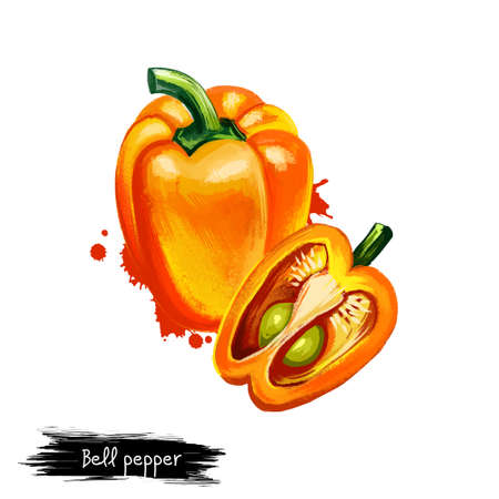 Digital illustration of Bell pepper or Capsicum annuum isolated on white background. Organic healthy food. Yellow vegetable. Hand drawn plant closeup. Clip art illustration. Graphic design element