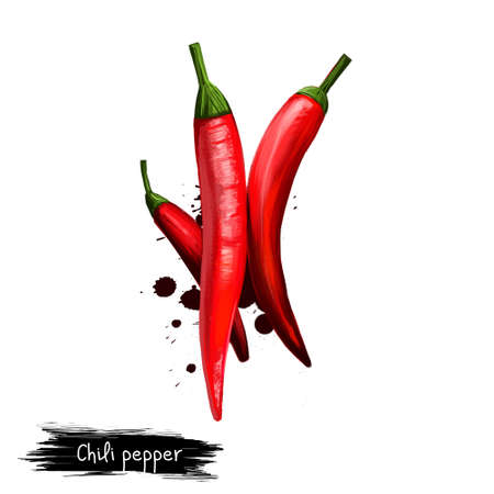 Digital illustration of hand drawn Chili or Chilli pepper isolated on white background. Organic healthy food. Red vegetable. Hand drawn plant closeup. Clip art illustration. Graphic design element Stock Photo