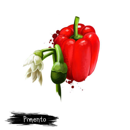Digital illustration of hand drawn Pimento or Cherry pepper isolated on white background. Organic healthy food. Red vegetable. Hand drawn plant closeup. Clip art illustration. Graphic design element